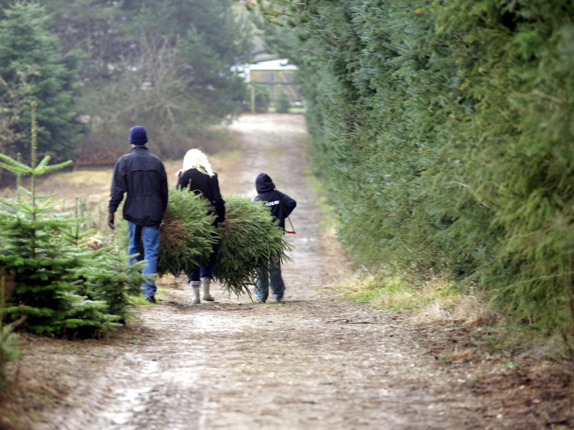 Sivertsens Juletræer